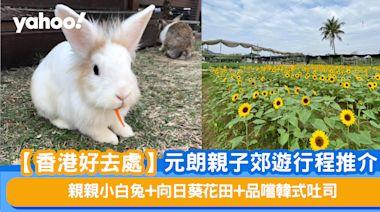 【香港好去處】元朗親子郊遊行程推介 親親小白兔+向日葵花田+品嚐韓式吐司