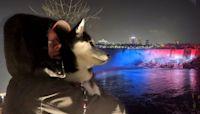 Huskies See Christmas at Niagara Falls at Night in Canada