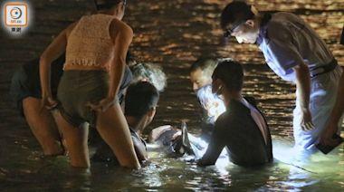海豚汀九灣泳灘浮沉 海洋公園專家合力抱走救治