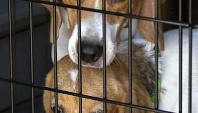 Lawmakers demand answers from Fauci on allegedly experimenting on puppies