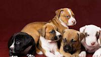Furry foster animals find new loving homes during coronavirus pandemic