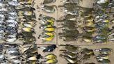 「到處都是鳥的屍體」 數百隻遷徙飛鳥撞上紐約大樓