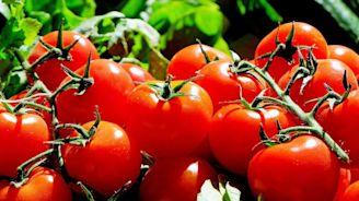 Martha Orozco, la colombiana que cultiva tomates en naves espaciales