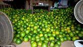 一年一會限定滋味 八方雲集邀您吃蜜柚助老農 - 自由財經