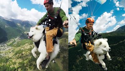 狗在天空飛!薩摩耶跟著玩飛行傘 淡定又享受網讚「冒險系萌犬!」