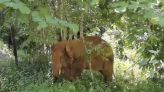 One of China's wandering elephants is returned to reserve