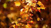 秋分之際 說說Fall和Autumn有何區別