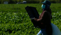 Farmers face excessive heat exposure due to climate change
