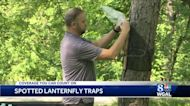 Pennsylvania Department of Agriculture demonstrates trap for spotted lanternflies