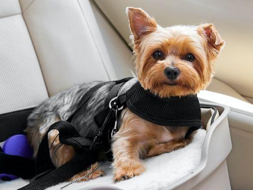 推薦十大狗用寵物汽車安全座椅人氣排行榜【2021年最新版】