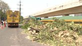 台中鐵路綠空廊道工程 黑板樹根毀地磚遭移除