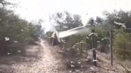 Swarm of locusts descends on northern Argentina
