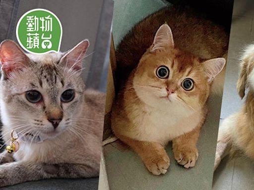周末好去處2021|5月貓狗領養日 東北古洞獲救貓媽媽和幼貓待領養 | 蘋果日報
