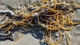 海灘出現黃繩子 她近看嚇壞:不要碰
