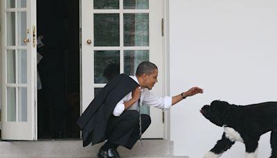 Barack Obama Announces Family's Beloved Dog Bo Has Died