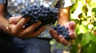 Wineries in Europe turning wine into hand sanitizer amid COVID-19