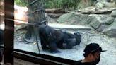 動物園上演18禁 猩猩性致一來竟「當眾口愛」