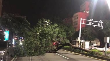 輕颱盧碧接近!高雄強風豪雨「2樹倒險砸車」 網怨:最好這樣不停班啦