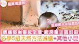 5大天然滅蟻方法-螞蟻築巢蔓延全屋 廚房重災區好麻煩!   家庭生活   Sundaykiss 香港親子育兒資訊共享平台
