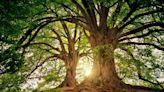 如何將森林碳匯轉為碳權?5 步驟申請 VCS 認證