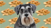 Can Dogs Eat Cashews Safely? An Expert Weighs In