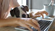 Pets could experience separation anxiety as owners return to work
