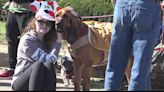 Pets take to streets of downtown Belleville for Humane Society parade
