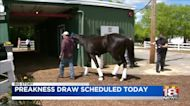 Preakness draw scheduled today
