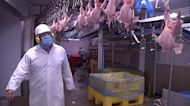 Brexit, COVID brew storm for UK chicken farmers