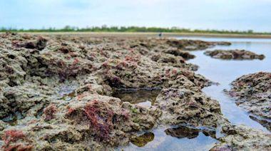 三接工作船擱淺審查會突取消 藻礁團體轟心虛:應該停工