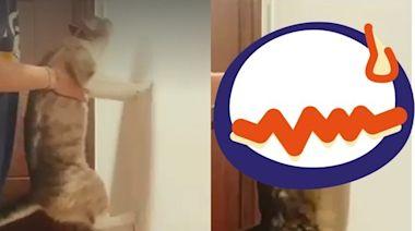 腳貼牆就是聰明貓! 她見呆喵「軟爛撞牆」笑翻:好歹也掙扎一下