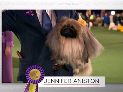 John Oliver Jokes Westminster Dog Show Winner Should Be Called 'Jennifer Aniston' (Video)