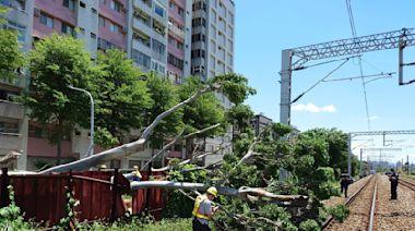 風好大!台鐵桃園內壢段樹倒軌道 火車差30公尺撞上