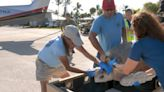 An injured turtle with 'bubble butt' rehabs in the Florida Keys and flown to a new home