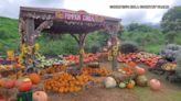 Kula Country Farms hosts annual pumpkin patch festival despite pandemic's challenges