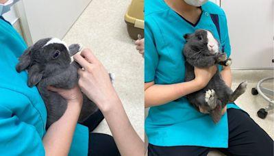 小兔兔剪指甲嚇到「兩腿狂抖」 可憐模樣網心疼:你努力了