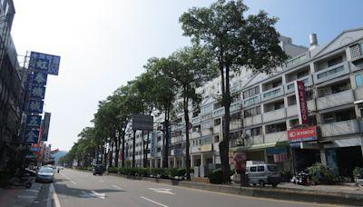 公館鄉黑板樹群鳥亂啼成災 每天2次噪音轟炸居民受不了