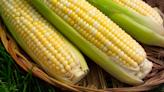 《農產品》原油瀉 原物料市場拉回 玉米/黃豆摔2%