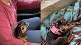 愛犬在外聞垃圾!媽帶回家驚見牠沒出門愣:複製貼上?   寵毛星球   新奇   NOWnews今日新聞