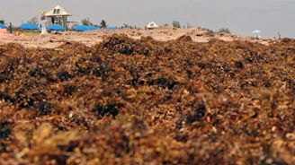 World's largest seaweed bloom stretches from Africa to the Gulf of Mexico