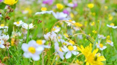 草原花海避暑季 6-8月來木格措,在18℃綠野仙蹤里清涼賞花