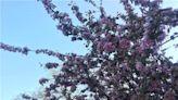 周末有風?別怕,來北京這裡看花花草草和無數小可愛!猜到是哪裡了嗎?