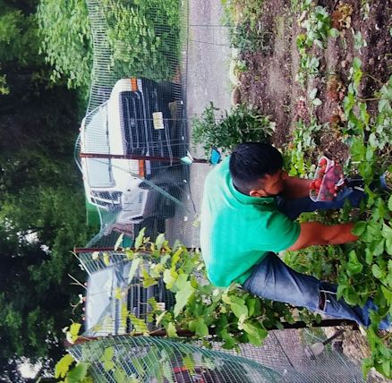 Danny S Stump Grinding Tree Removal
