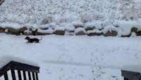 Dog Bounds Through Inches of Fresh Snow in Draper, Utah