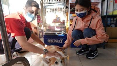 新北寵物健康生活站達38據點 提供認養、飼養諮詢及協尋