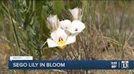 FOX 13 News 9 PM | Thursday, June 10