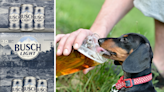 "Busch Offering $20,000 to Hire an Official ""Dog Beer"" Taster"