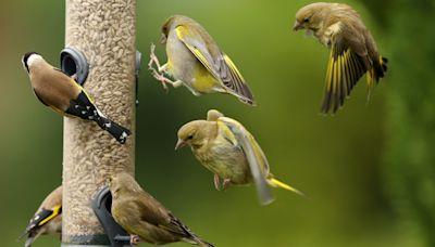 Eight in 10 of Britain's most popular birds in decline