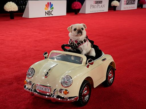 Feel Good TV Happens Sunday When We All Watch the Beverly Hills Dog Show