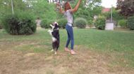 This 2-year-old border collie nails impressive dance routine with her owner